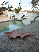 Tiber river in Rome, Italy. The nearest bridge is Ponte Vittorio Emanuele II.