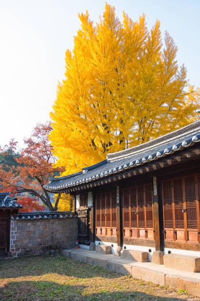 Autumn in Seoul Korea stock photo
