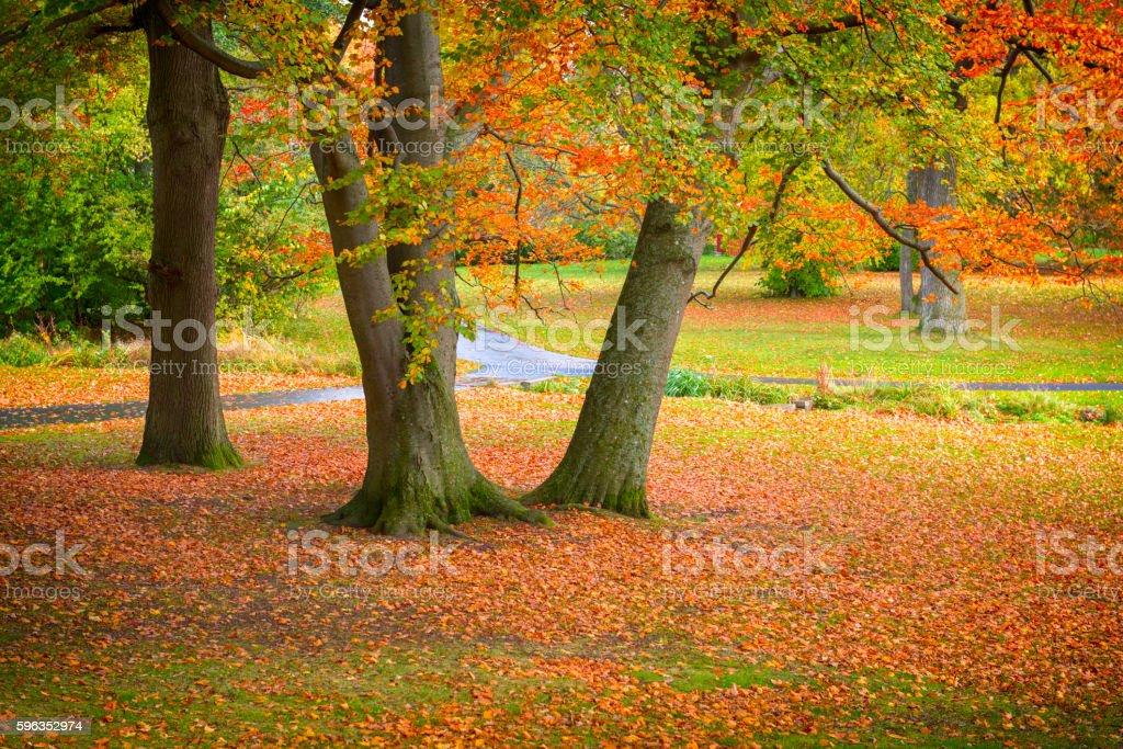 Autumn in Slottsskogen park royalty-free stock photo