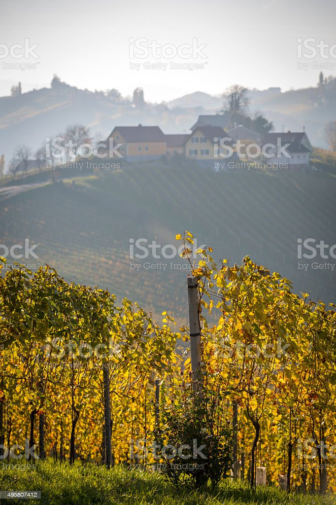autumn in southern styria, an old wine growing country in austria stock photo