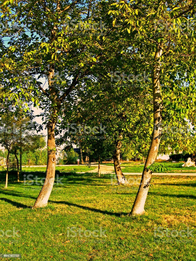 Autumn in the citys park royalty-free stock photo
