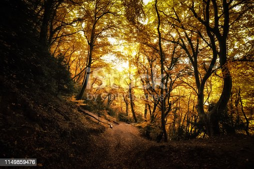Near Symmonds Yat, The Forest of Dean, Gloucestershire