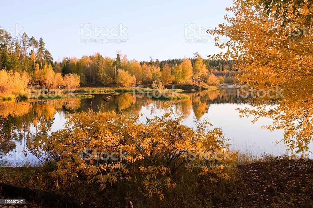 Autumn in the forest. royalty-free stock photo