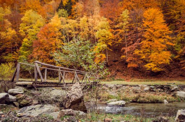 Herbst in den Wald. – Foto