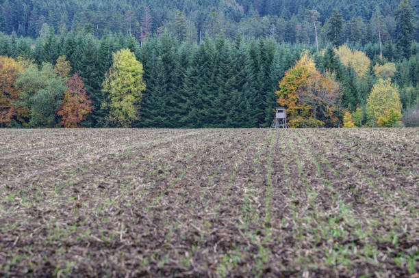 Autumn in the hunting ground. stock photo
