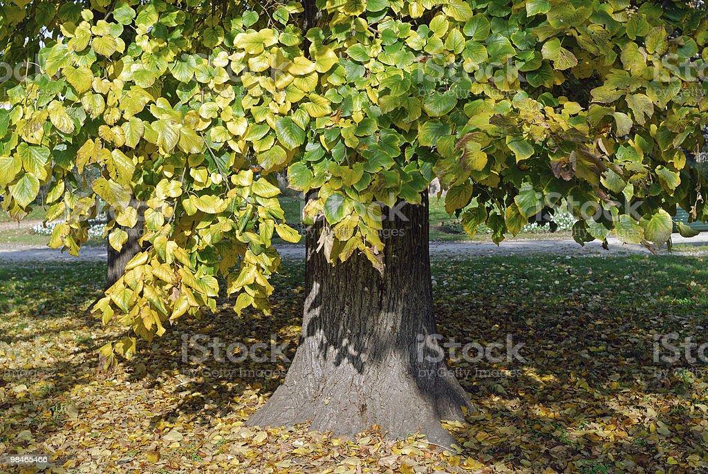 Autumn in the park (Milan, Italy): a tree royalty-free stock photo