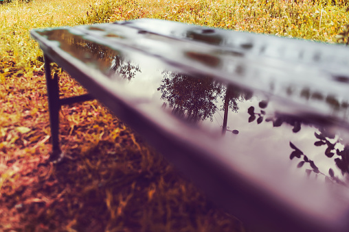 Autumn in the Park. After the rain. Reflection in a puddle on a wooden bench.
