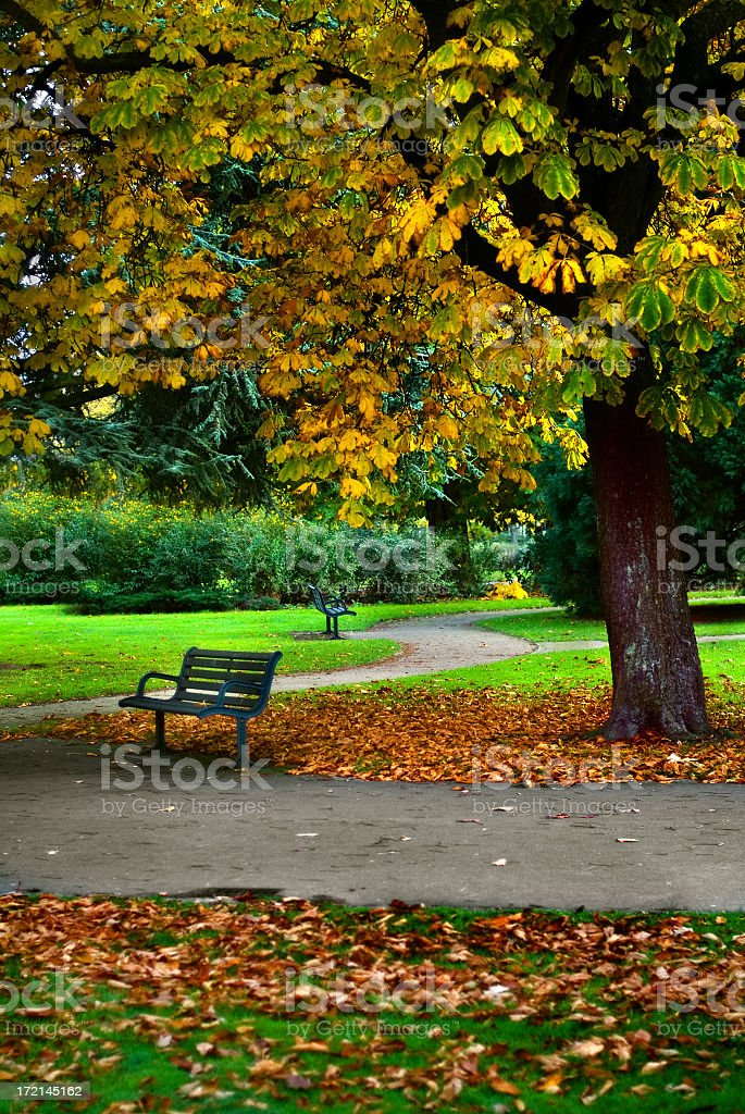 Autumn in the park - Bench in the footpath royalty-free stock photo