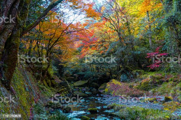 Photo of autumn in the park, oita, japan