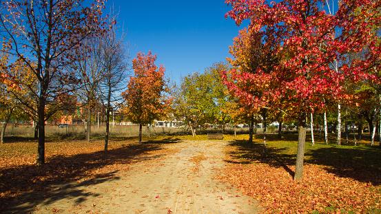 Autumn in the Park - Otoño en el Parque