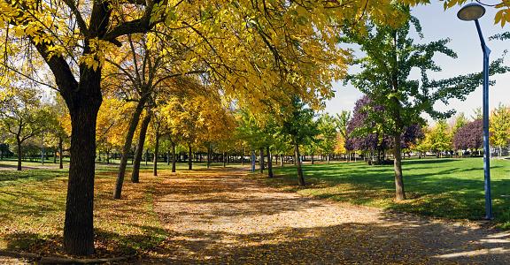 Autumn in the Park - Panorama de Parque  en Otoño