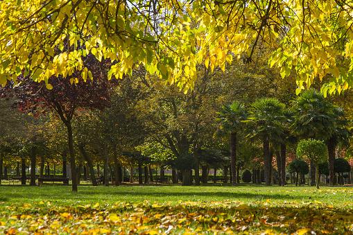 Autumn in the Park - Parque Público en Otoño