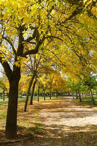 Autumn in the Park - Parque Publico en Otoño