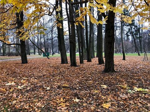 1038696838 istock photo Autumn in the park 1183780485