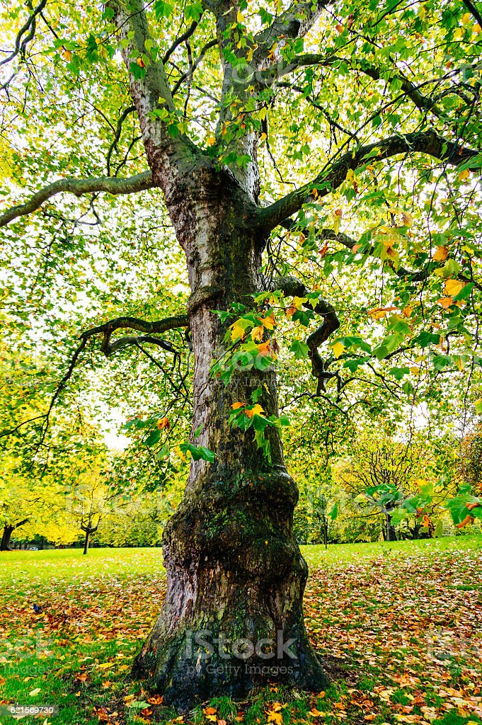 Autunno nel parco  foto stock royalty-free