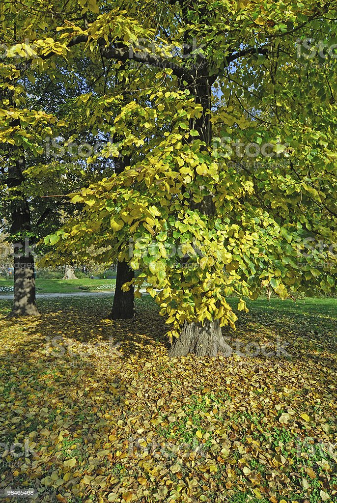 Autumn in the park (Milan, Italy): trees royalty-free stock photo