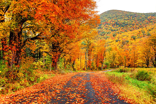 automne dans la pioneer valley région du massachusetts - feuillage automnal photos et images de collection