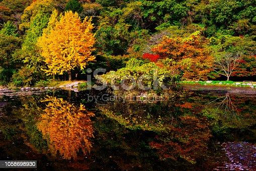 아담한 연못이 가을을 삼켰다.  연못에 비춰진 가을 단풍들이 더욱 아름답다.   VH533