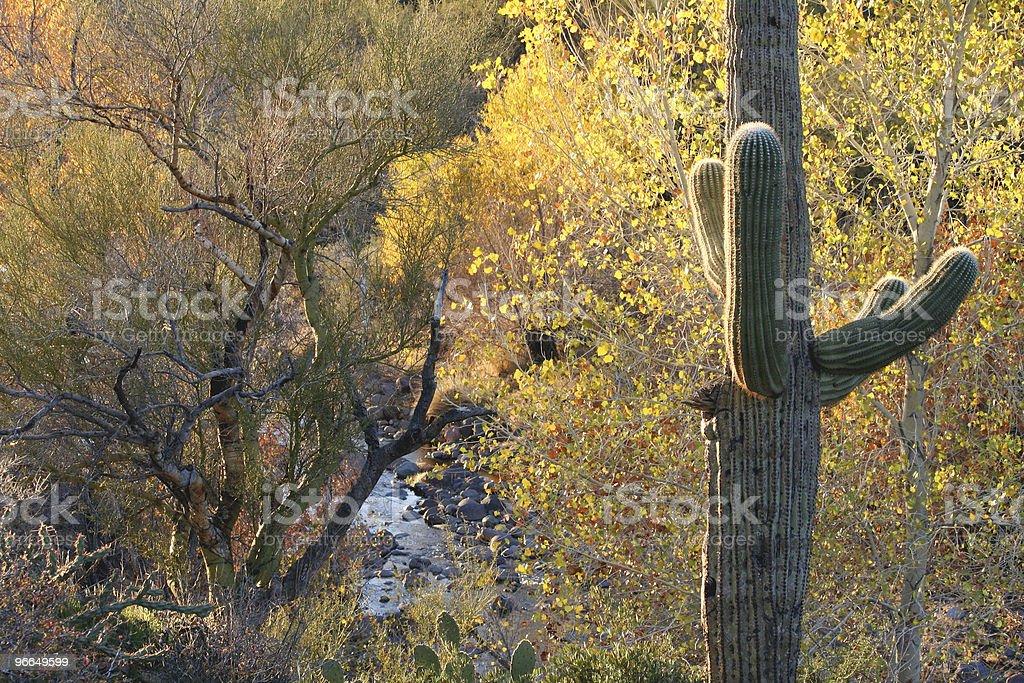 Autumn in the Sonora Desert royalty-free stock photo