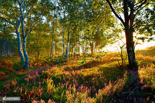 istock Autumn In The Surrey Hills 604855650