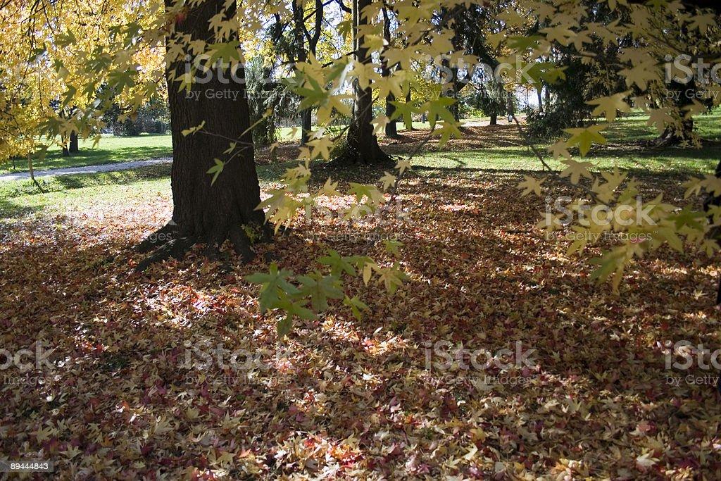 Autumn in the Tivoli park, Ljubljana, Slovenia royalty-free stock photo