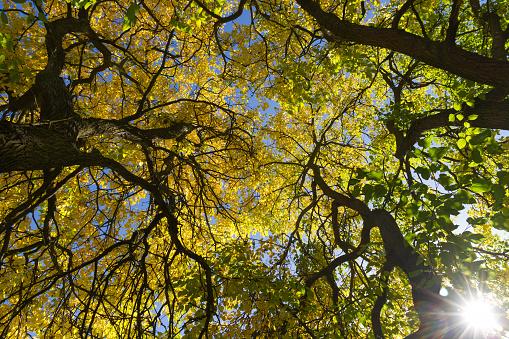 Autumn in the treetops - Otoño en  los arboles