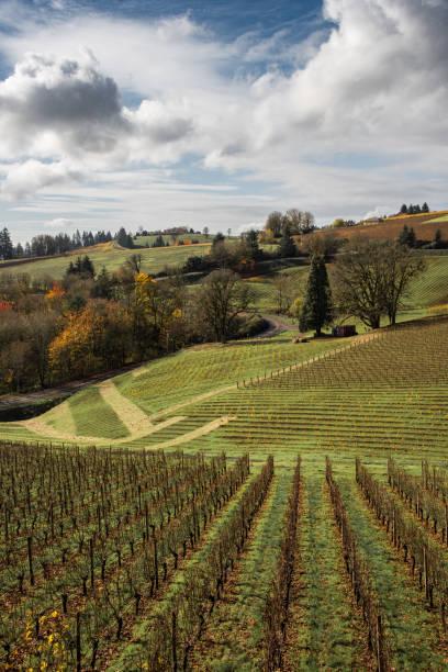 Autumn in the vineyard stock photo