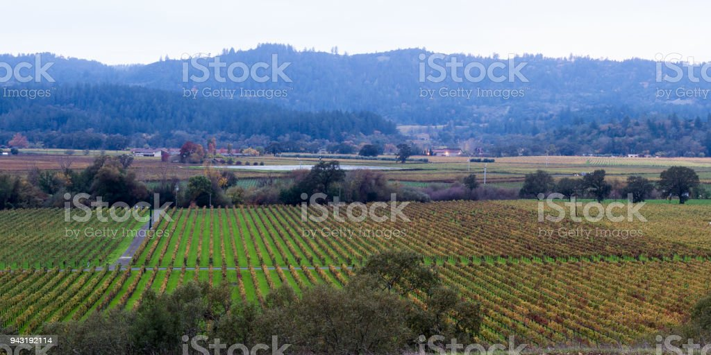 Autumn in the vineyards stock photo