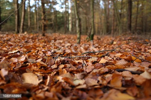 Autumn brown leaves in the woods