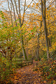 istock Autumn in the woods. 1284598477