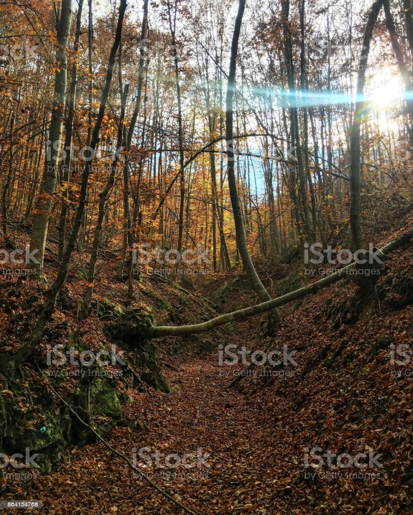 Autumn in the woods royalty-free stock photo
