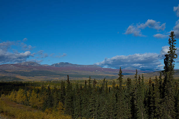 autumn in the yukon, canada - yt stock pictures, royalty-free photos & images