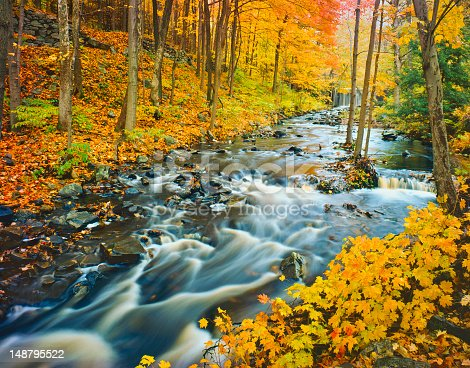Green Mountain stream flowing through the hardwood forest of Vermont