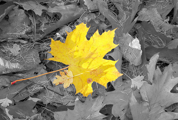 autumn individuality - deviate stock pictures, royalty-free photos & images