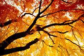 Autumn 赤外線 Willow