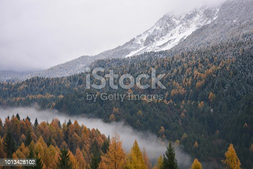 The beauty of autumn colors in the forests