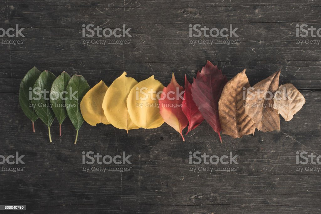 Autumn Is Coming stock photo