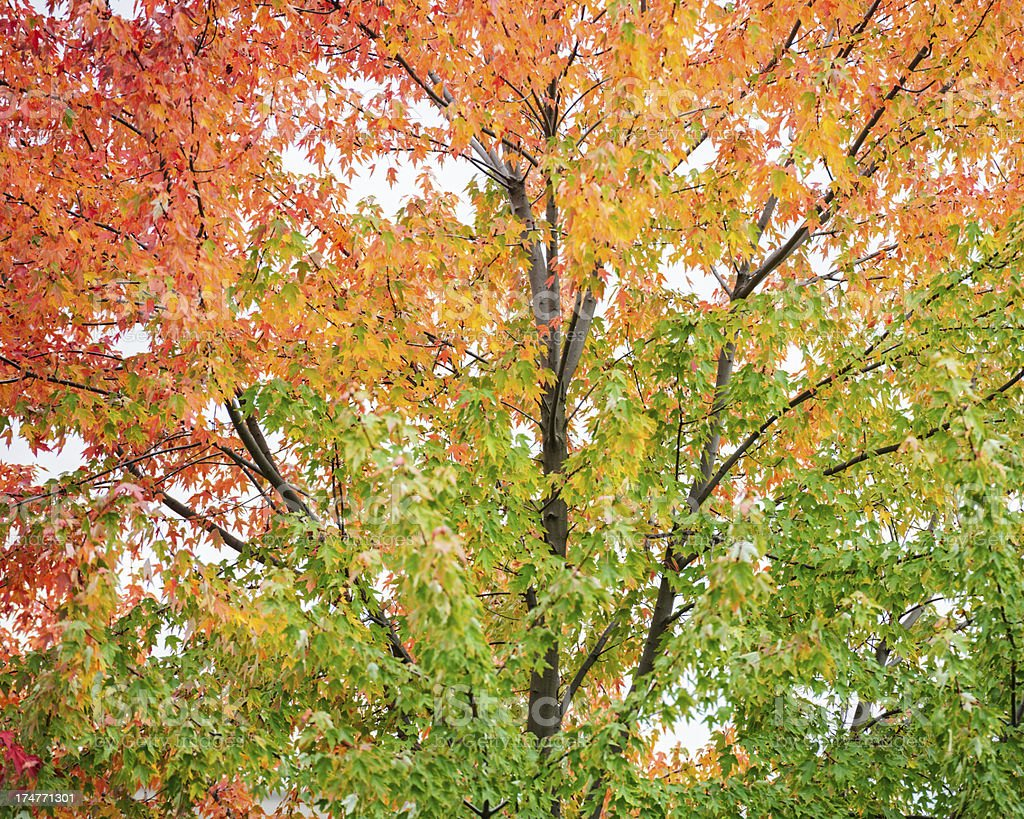 autumn is here royalty-free stock photo