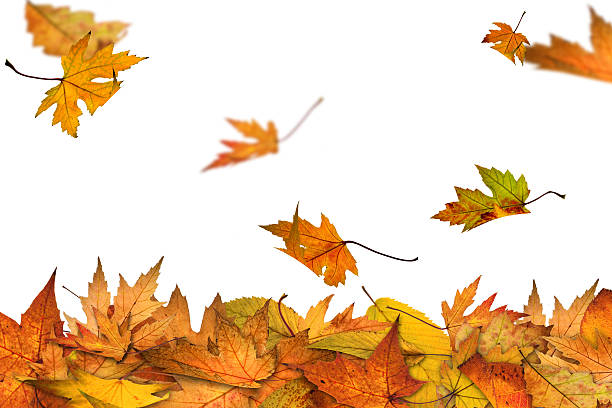 Autumn is here stock photo