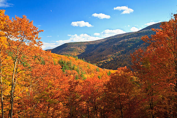 Autumn Kaaterskill Clove Colorful autumn foliage in Kaaterskill Clove in the Catskills Mountains of New York catskill mountains stock pictures, royalty-free photos & images