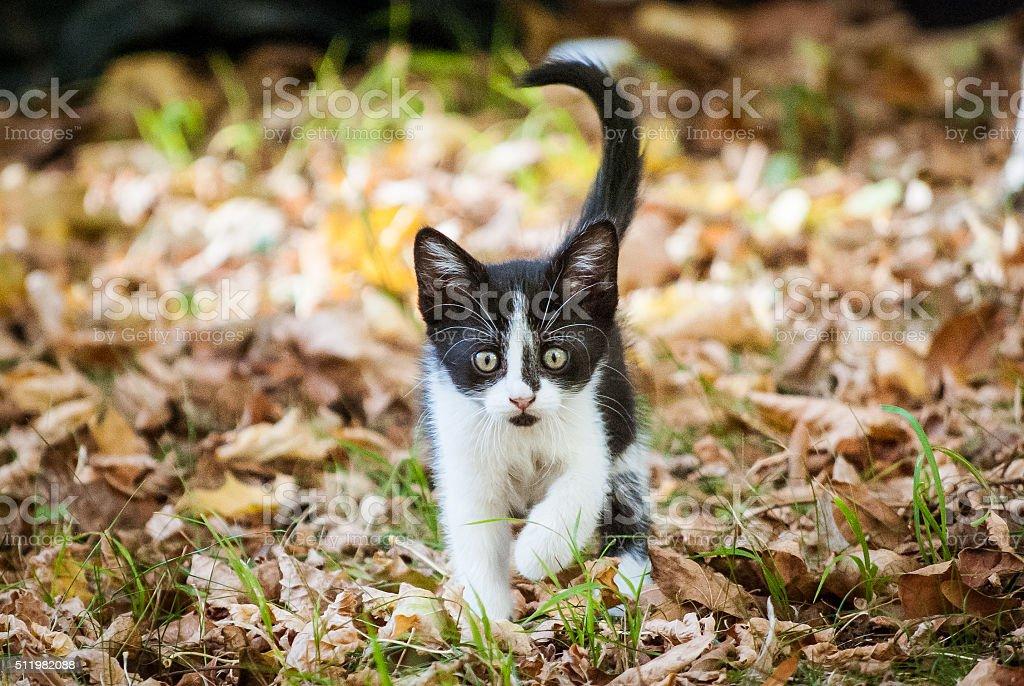 Autumn Kittens 1 stock photo