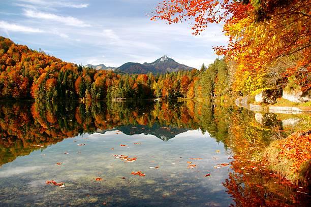 automne lac - feuillage automnal photos et images de collection