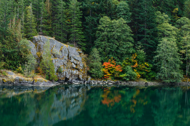 autumn lakeshore reflection - lakeshore stock photos and pictures