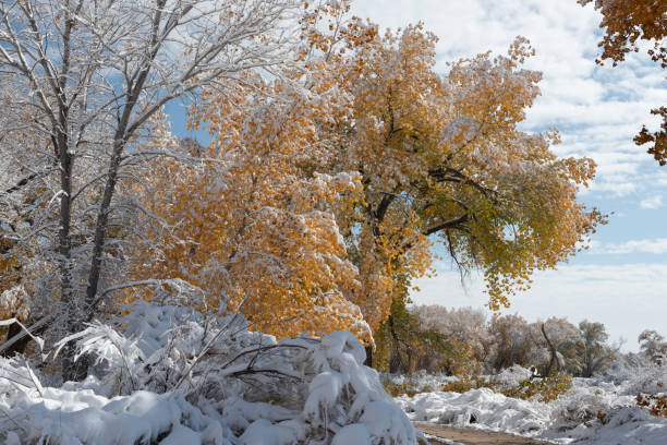 Autumn landscape after a snow storm stock photo