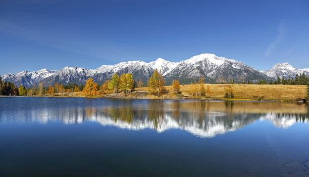 Autumn Landscape and Distant Snowcapped Rocky Mountains Autumn Landscape and Distant Mountain Tops from Quarry Lake above Canmore in Alberta Foothills near Banff National Park Canada kananaskis country stock pictures, royalty-free photos & images