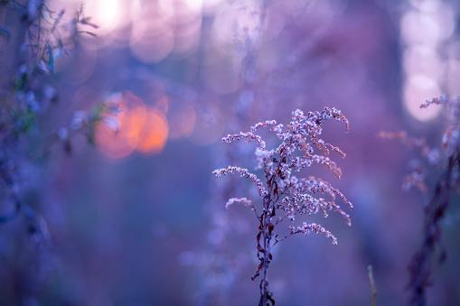 Autumn landscape at purple sunset for background.