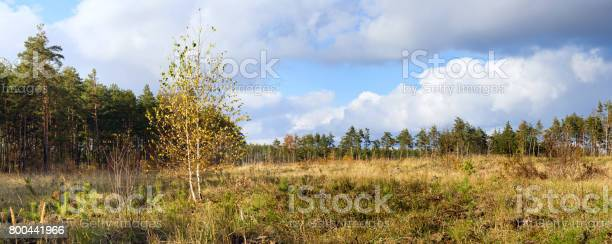Autumn landscape banner panorama birch on the background of meadows picture id800441966?b=1&k=6&m=800441966&s=612x612&h=uln7rjkxdqdbl0hodu89p189saxkrwj1tcdujehfj1k=