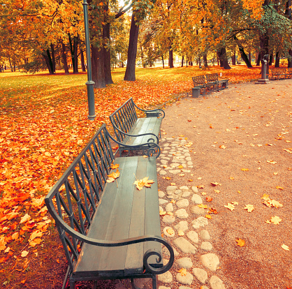 autumn leaves lie on the lawn and path in the park in sunshine. beautiful autumn concept