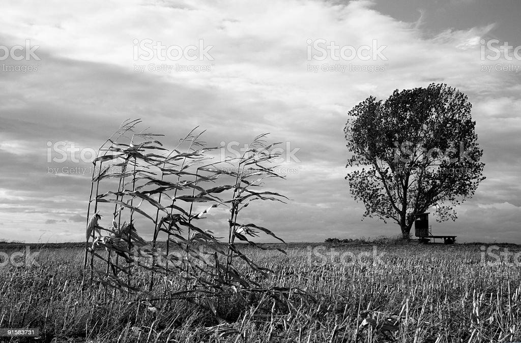 Autumn Landscape BW royalty-free stock photo