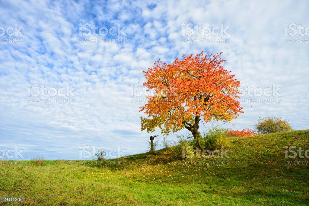 Sonbahar manzara, kiraz ağacı yaprakları renk değiştirme ile Orchard - Royalty-free Almanya Stok görsel